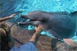 Дельфины должны иметь собственные особые права